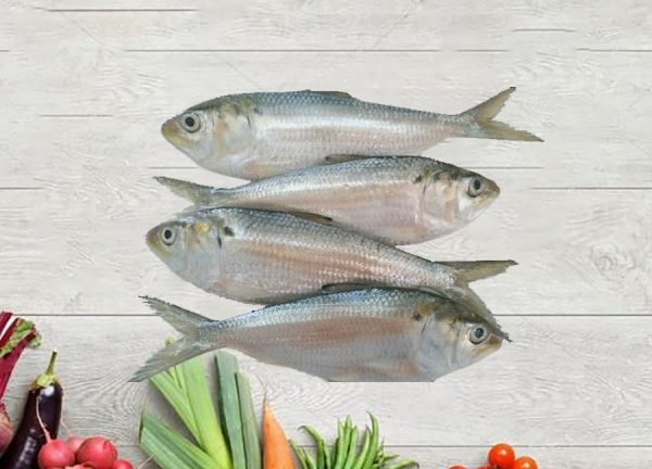 cá mòi dầu